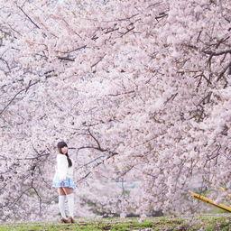 もう直ぐ桜の時期なので去年の桜ポトレ!エロくない!