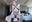 7/18朝の投稿 FGO水着武蔵第三形態 今日の編集 ⭐️500到達で有料記事を無料開放