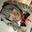 ガチ欅⊿ねる似 蘭子の大事な子宮が精液便所にされちゃいま~す実況負け試合種付けオフパコみんな見てね[NN]