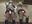 会員様特別割【個撮】カラオケで現役のギャルたまごちゃん2人組とヤバすぎる援交パンチラ映像(1)