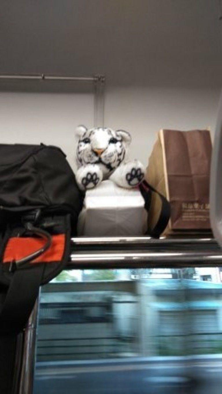 写真集 ホワイトタイガーの赤ちゃん (旅行)
