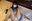 第13弾【しずく@コスプレ女子部】オリジナルサイズ写真集99枚