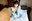 第19弾【かりん@コスプレ女子部】オリジナルサイズ写真集58枚