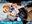 ガチ洗脳ちゃん Hcupフランスハーフ池袋系ガチオタレイヤー サイレント中出し性的強要肉便器 原ネ/申 フィッシュル[H]【3月新作】3/19公開