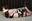 櫻乃春 - 黒い下着の生贄 - 全篇