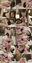【個撮】爆巨乳のまゆゆ似超かわいい欲情たまごちゃん!デカちんに無理無理ビクビク大絶叫イキまくり映像(1)
