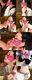 No.005 女教師風メガネ美女の超エロフェラ顔射!ジュポジュポ激しくしゃぶらせてからの舌コキ、腰振り口マンココキで口内と可愛い顔にたっぷり射精!!!