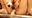 欲求不満の超ドエロ人妻ゆずちゃんの1と2をセットにしてご案内しちゃいます。変態ゆずちゃんの電マ潮吹きオナニーとディルド手マン潮吹き!★マークを押していただけると励みになるのでよろしくお願いします。