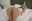 ピンキーwebDL068/湊莉久さんの動画_見放題コース用