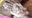 【Fantia購入限定特典8/11個握券付き】アリスのハメドリ・ウォー!   島田アリスちゃんはいいぞ!!