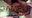 ガチがな欅⊿こさかな似 ブラックカメコ神に膣奥トントンされちゃって完全敗北(涙)→秋葉最強F○amゆきちゃん!?が中古精液便所になっちゃった☆