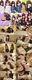 【個撮】大親友と卒業記念たまごちゃん恥ずかしすぎビクビク痙攣放心状態!崩壊!悶絶!イキ死!大乱狂映像(3)