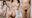 【本物】正真正銘アイドル お*好き神乳&ロリカワで有名な2人組を待ち伏せ!あの子のモロ出しまんこ・おっぱい♥マジ潮吹き 痙攣逝きSEX 鬼畜中出し【乱交】