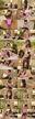 【個撮】いまどき純粋バスケ部ちゃん無理矢理襲われビクビク大絶叫イキ地獄オナ&パイズリ純情汚され悶絶映像(3)