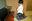 【動画】おしるこ君 僕っ子とおじさん◎黒パンスト&白パンスト<ランガードあり・つま先補強なし>