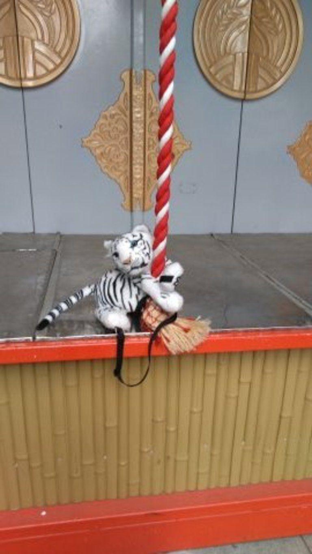 写真集 ホワイトタイガーの赤ちゃん (お散歩)