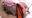 ピンキーwebDL024/ミルカさんの動画