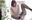 【くすぐり】大人気女優 麻里梨夏チャンの足裏くすぐり地獄!パンストVer.