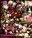 【月額コスプレ緊縛倶楽部特集1】「召喚美少女シ●ラ&レ●×アナル&マ●コ2穴中出しファック×10連続大量ザーメンぶっかけ みゆ&ゆあ」