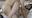 後編【顔出しFHDフル動画】ムチムチFカップ美女の肉厚SEX