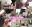 【期間限定 無料DL】Sex Friend 44「ハメールレーン Vol.01 - ラフィ◯ - 」