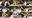 【盾〇ラフタ〇ア】エロ可愛いケモ耳娘がお漏らし・口内発射に中出し2回で体がピクピク《夢幻泡影05》
