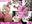 【FG〇水着武蔵】FG〇ドスケベな武蔵の人[第参]【8月新作】