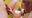 猫顔の夏美ちゃん。裏筋舐めからの高速ヘドバン的フェラ!1m34s